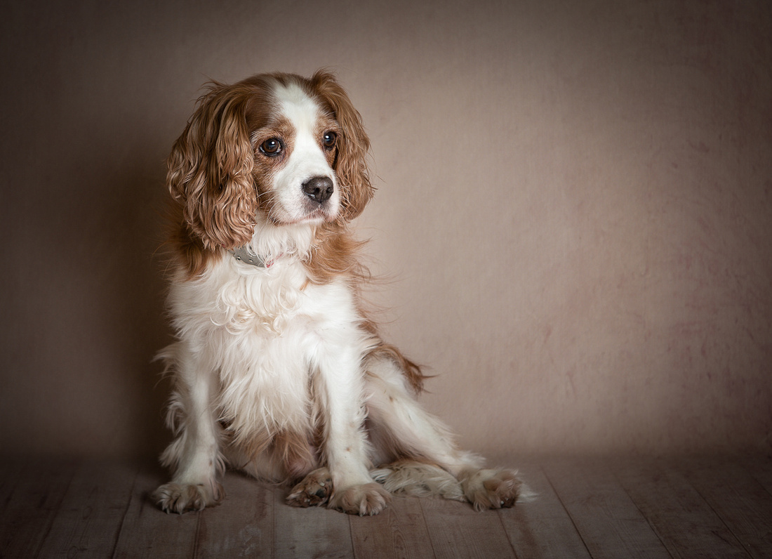 Award Winning Pet Photography in Manchester