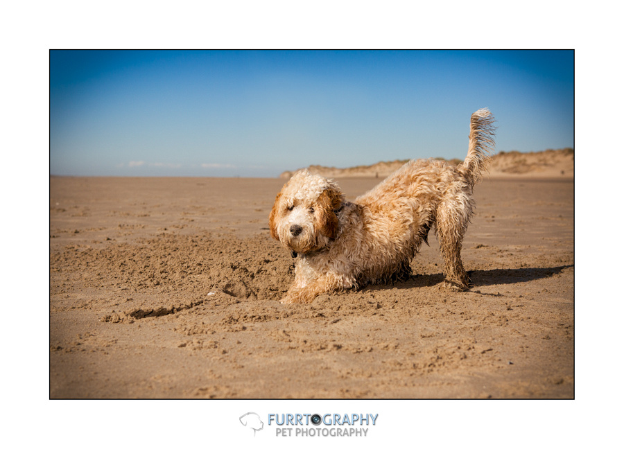 Manchester Pet Photographer based in tameside