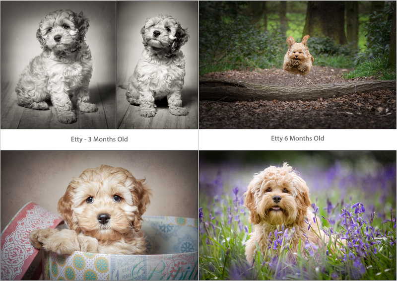 Pup and Up Portrait Session