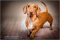 Manchester Dog Photographer