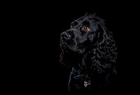 Furrtography Pet Photography Fine Art Dog Portraits