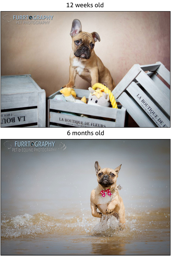 Puppy Packages Pup and Up