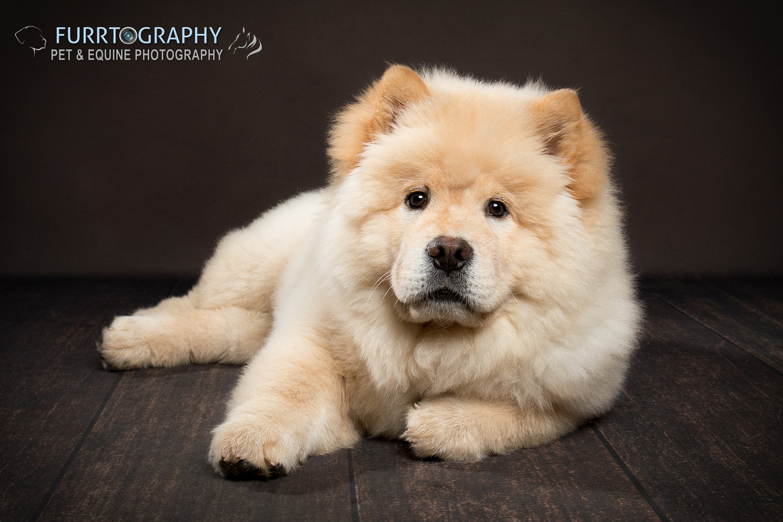 Furrtography Pet Photography Cheshire