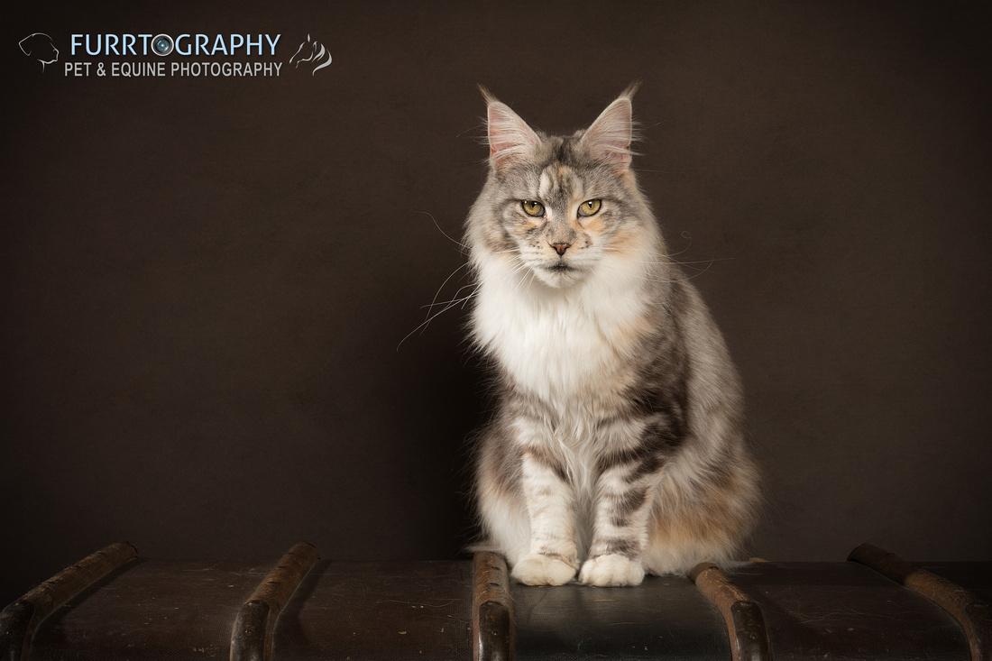 Furrtography Cat Portraits