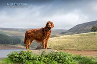 dovestones reservoir pet photography