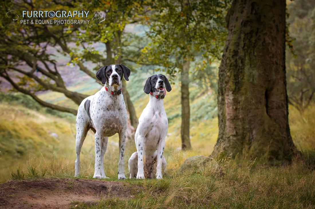 Dovestones Reservoir Pet Portraits