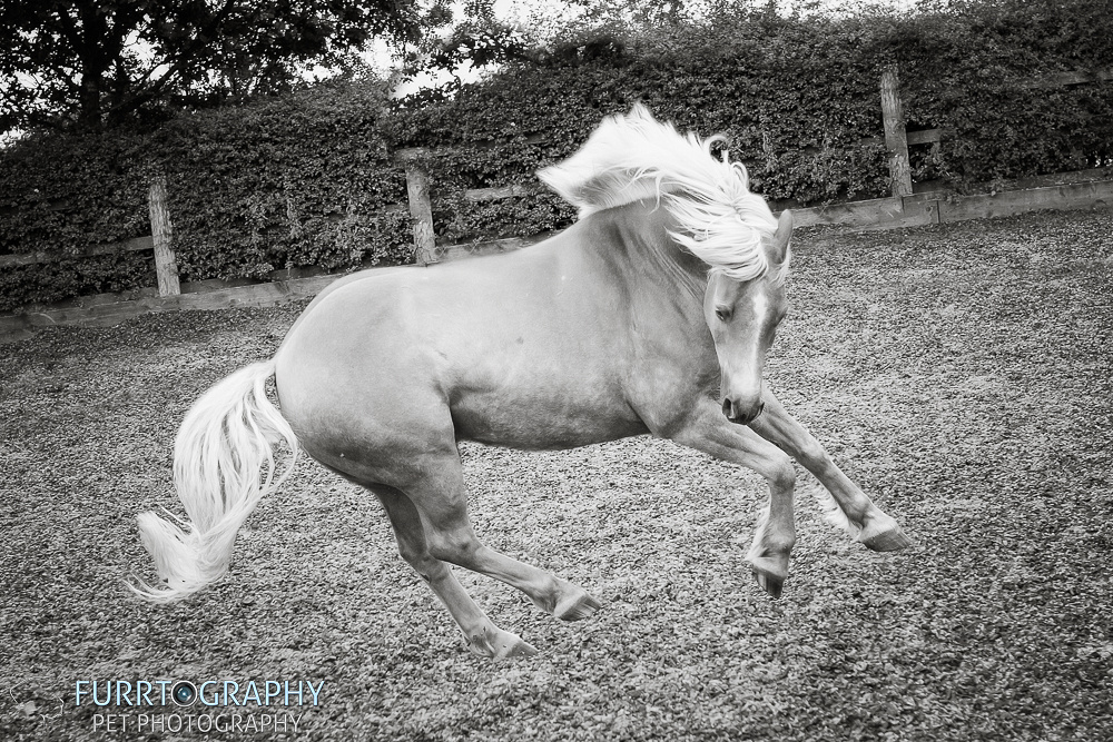 manchester equine photography