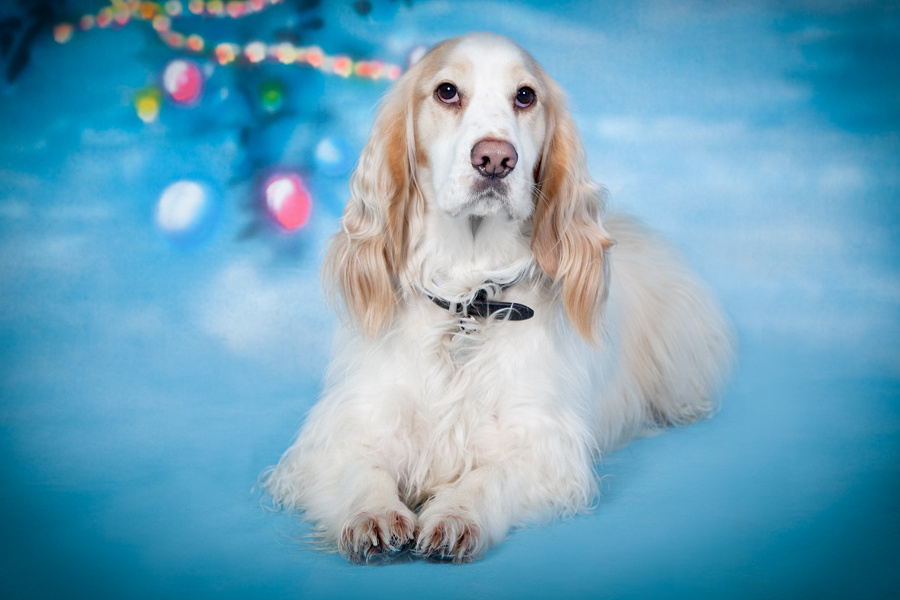Santa Paws - Furrtography charity event at academy4dogs